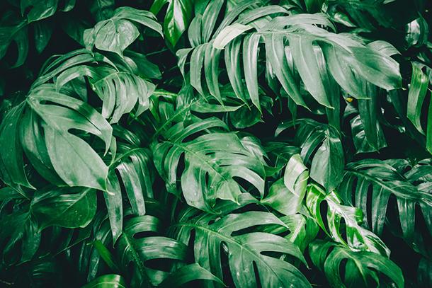 식물에게 물을 주는 법