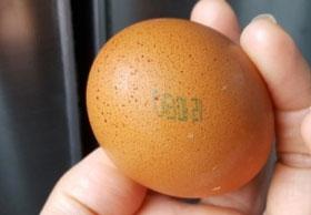 국내도 '살충제 계란' 파문