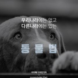 [카드뉴스] 우리나라에는 없고 다른나라에는 있는 동물법