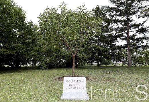 문재인 대통령, 모감주나무 기념식수