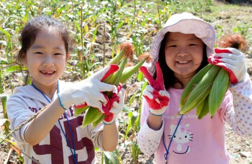교보생명, '가족사랑 농촌체험' 진행