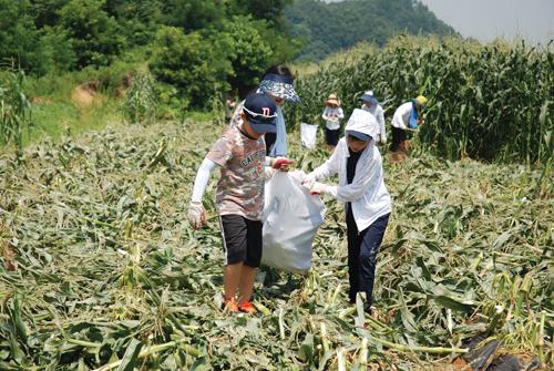 삼성카드는 지난 7월, 충청북도 괴산군에서 임직원 가족들이 참여하는 열린나눔 봉사버스 농촌봉사활동을 진행했다.