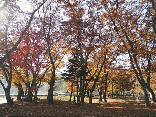▲창원시 삼풍대공원(제공=산림청 보도자료)