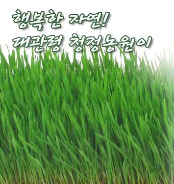 ▲ 캡쳐=대관령청정농원 홈페이지