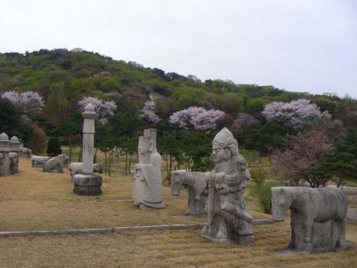 ▲의릉 주변 산벚나무 군락