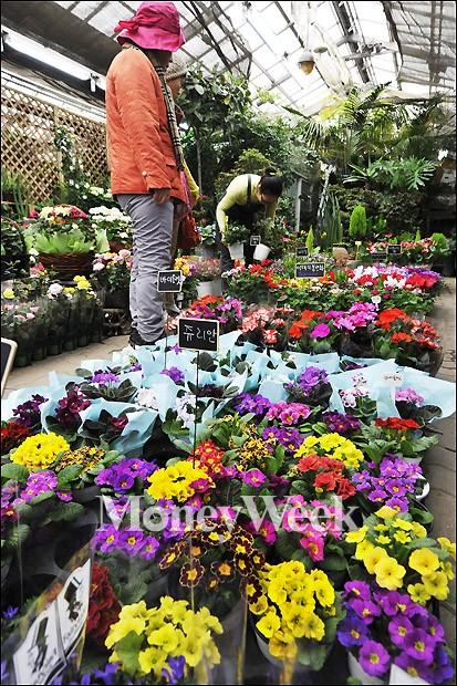 [MW사진] 봄꽃 사러 가요~
