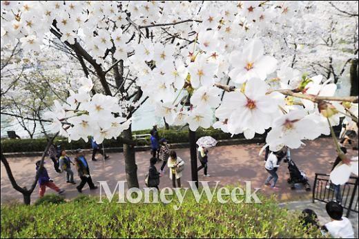 [MW사진] 석촌호수 벚꽃축제 4일 '팡파르'