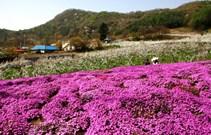 ▲양평 가루매마을(제공=농식품부 보도자료)