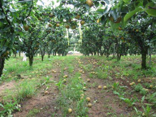 농협손해보험, 농작물재해보험금 선지급