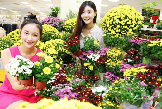 15일 오전 서울시 용산구에 위치한 이마트 용산점에서 모델들이 가을 상징 국화를 선보이고 있다. /사진제공=이마트
