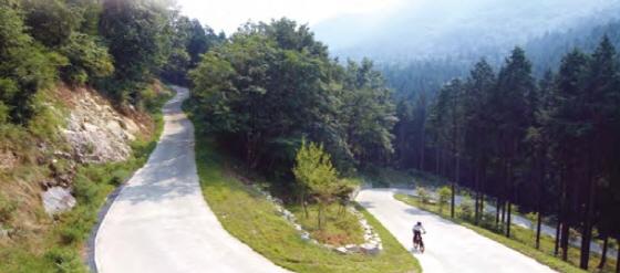 삼나무와 편백나무 숲 임도를 달릴 수 있는 방장산 코스/이미지제공=전라남도