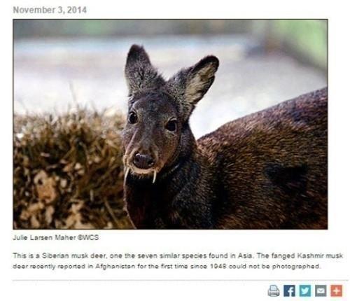 '뱀파이어 노루 발견'/사진=국제야생동물보존협회 홈페이지 캡처