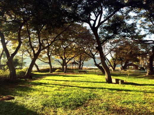 함평 '모평마을숲', 전국 아름다운 숲 선정