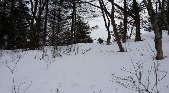 등산로 옆 눈밭에는 이름 모를 새들이 자주 눈에 띄곤 하지만 아쉽게도 카메라에 담지 못했습니다.