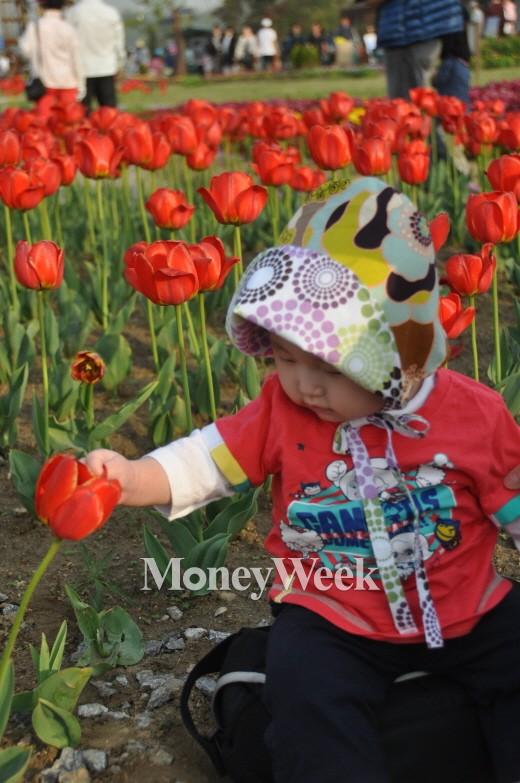 ▲농림축산식품부와 농촌진흥청은 2015년 3월의 꽃으로 '튤립'을 선정했다.