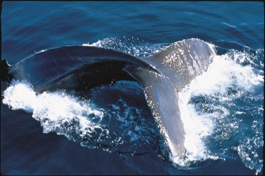 '가장 외로운 고래' 사진은 기사내용과 무관. /자료사진=이미지투데이