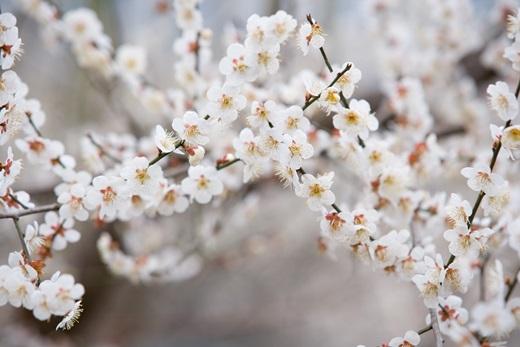 '서울 벚꽃 축제' /자료사진=이미지투데이