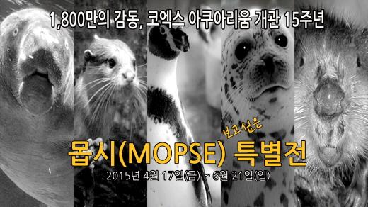 몹시(MOPSE) 보고싶은 '코엑스 아쿠아리움 특별전' 개최