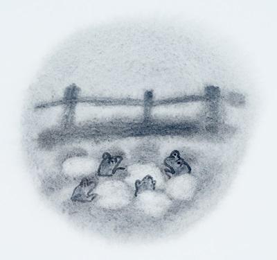 '발톱개구리' /자료사진=이미지투데이