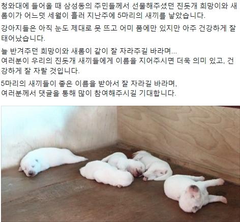 '청와대 진돗개' '박근혜' /사진=박근혜 대통령 페이스북 캡처