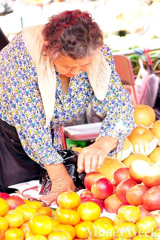 [MW사진] 올해 과일은 풍년