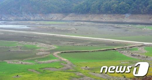 지난달 27일 충남 보령시 보령댐 상류지역의 바닥이 물이 마르면서 초원처럼 변하고 있다. /자료사진=뉴스1DB