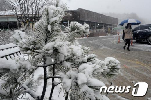 강원 지역에 첫 대설주의보가 발효된 지난 24일 평창군 대관령휴게소에 내린 눈이 소복하게 쌓이고 있다. /사진=뉴스1