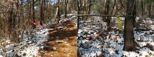 백년 이백년 누군가 떼어내 줄때까지 썩지도 않을 비닐조각을 매달고 있어야 하는 나무의 입장은?