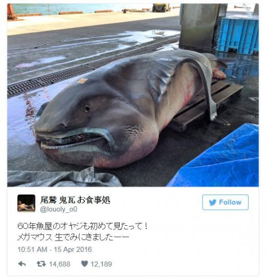 /자료=일본 한 네티즌의 트위터