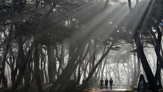 '세계 최고령 나무' (본 이미지는 기사 내용과 관련 없음). /사진=뉴스1DB