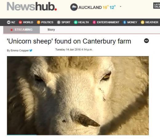 유니콘 양. /자료=유니콘 양에 대해 보도한 뉴질랜드 Newshub 홈페이지 캡처