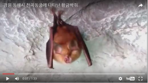 붉은박쥐 발견. /자료사진=유튜브 영상 캡처