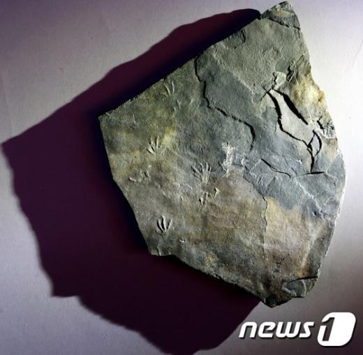 도마뱀 화석. /사진=뉴스1(문화재청 제공)