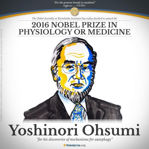 일본 노벨상. 오스미 요시노리 교수. /사진=노벨상 홈페이지