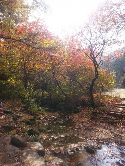 [건강] 등산로 젖은 낙엽 조심하세요