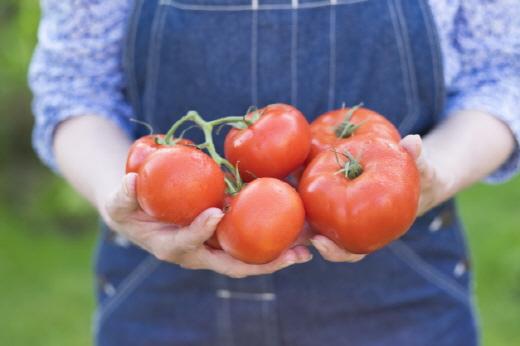 노화 예방을 위한 대표적인 파이토케미컬 토마토.