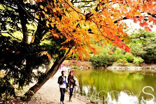 [머니S포토] 가을 속에서 달콤한 데이트를 즐기는 '커플'