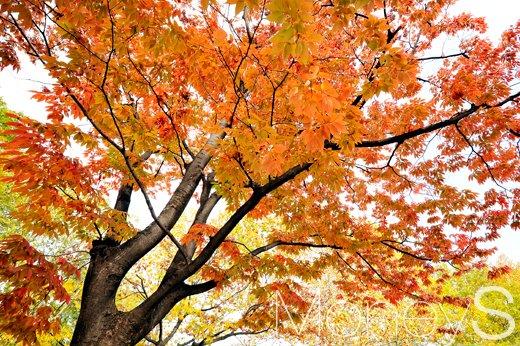 [머니S포토] 화창한 날씨, 그리고 붉게 물든 가을 정취