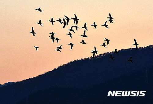 입동을 이틀 앞둔 지난 5일 경남 남해군 고현면 인근 들녘에서 겨울 철새 무리가 날고 있다. /사진=뉴시스