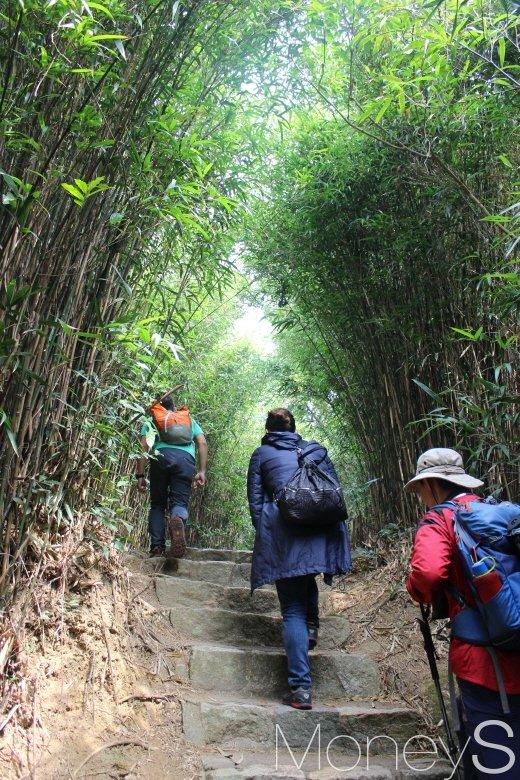 시원한 대나무숲 토끼굴. 이정표 가까이 신우대숲이다. /사진=박정웅 기자