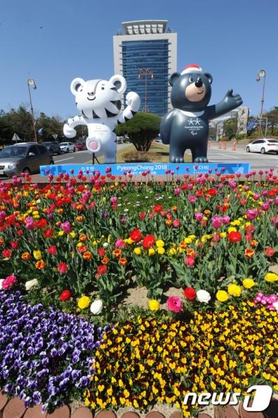 평창올림픽 참가 결정. /자료사진=뉴스1