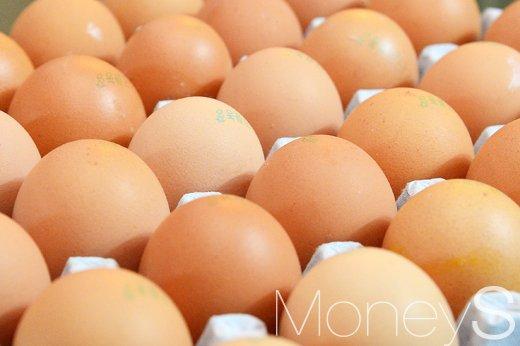 살충제 계란 파동. /자료사진=임한별 기자
