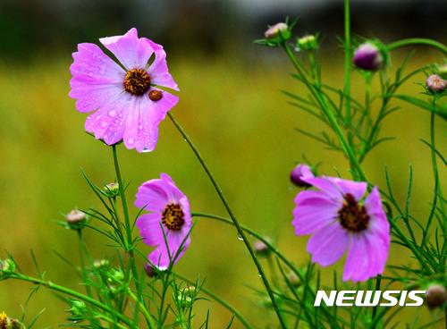 [오늘 날씨] 전국에 가을비, 남부 최대 100mm… 낮 기온 27도 안팎