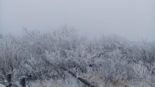 설악산눈. 지난 3일 밤 설악산 고지대에 첫눈이 내리면서 4일 오전 적설량이 35㎝를 기록하는 등 겨울이 다가왔음을 실감케 하고 있다. 사진은 4일 오전 11시쯤 설악산 오색~대청봉 구간 설경. /사진=뉴스1