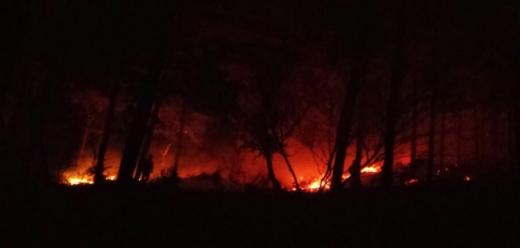 영광 물무산 산불. 30일 오후 5시31분쯤 전남 영광군 영광읍 물무산에서 화재가 발생했다. /사진=영광군 제공