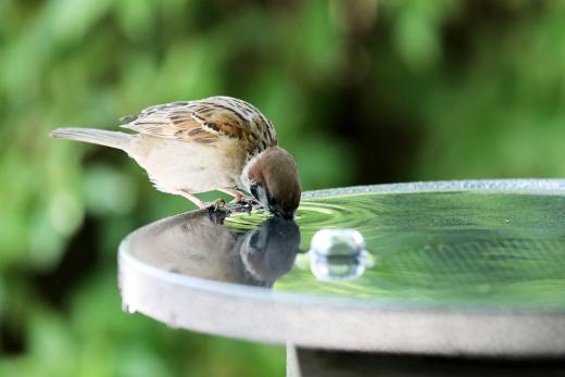 28일에는 전국이 대체로 맑은 가운데 남해안과 제주에서 한때 비가 내리겠다. 사진은 초여름 날씨를 보인 최근 서울 용산구 효창공원에서 참새가 물을 마시는 모습. /사진=뉴스1 이재명 기자