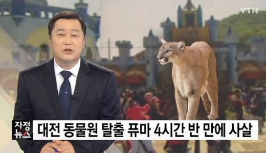 퓨마 결국 사살. /사진=YTN 방송캡처