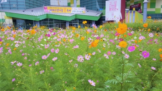 ▲ 고양가을꽃축제-가을 들녘 화단. / 사진제공=고양시