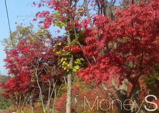 [건강] 계절 키워드로 알아보는 가을철 관절 건강 지키는 방법