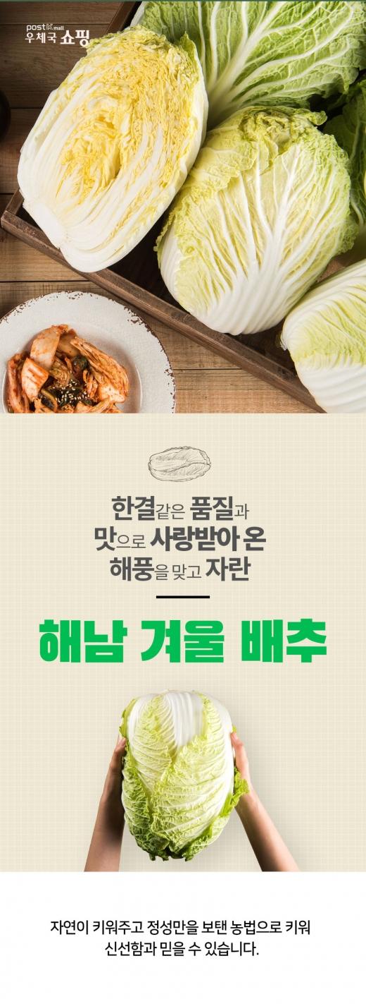 전남우정청, '해남 겨울 배추' 온라인몰서 특별 할인 판매